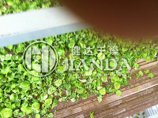DWP脱水蔬菜干燥生产线