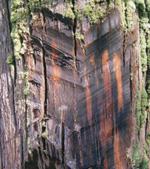干燥设备如何在对流介质木材中干燥